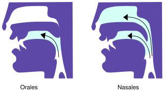 Perbedaan les voyelles orales dan les voyelles nasales
